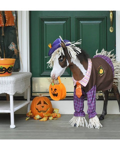 Halloween Pets 2011 Photo Contest