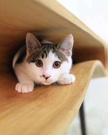 Cat-table-surprised-cat