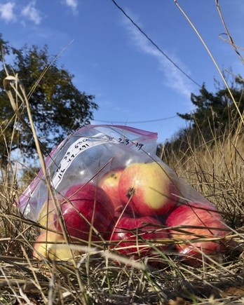 The Lost Apple Project
