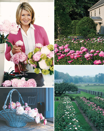 martha stewart collage with peonies