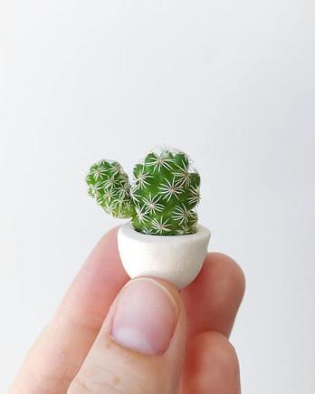 mini cacti tierra sol