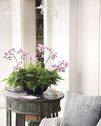 tableau-orchids-032-d111604.jpg