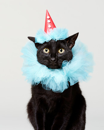 Frill Seeker Cat Clown Halloween Costume & Pet Costumes | Martha Stewart