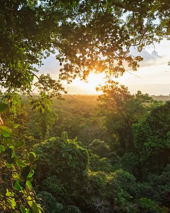 Rainforest in the Ecuadorian Jungle