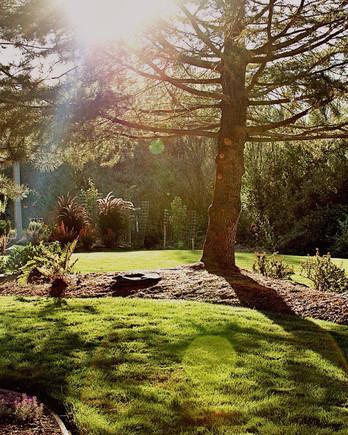 trees-planted-backyard-550091325