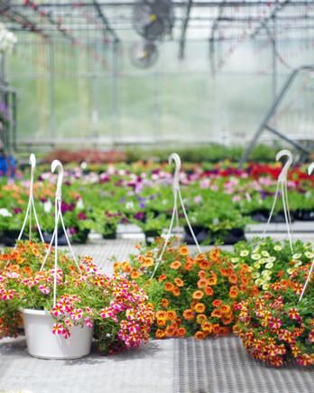 garden center shopping tips