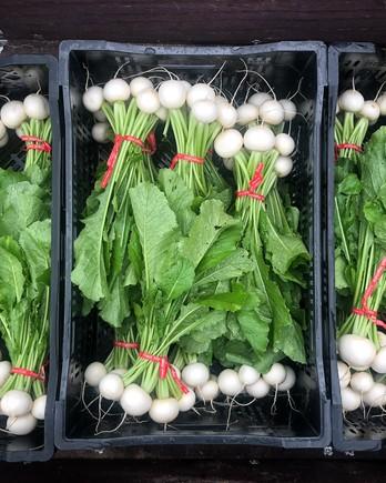 bundles of hakurei turnips in crates