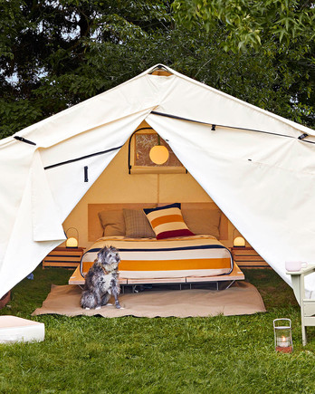 Dog inside tent with bed