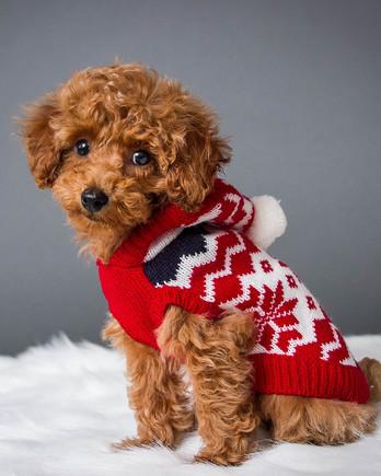 红白毛衣玩具贵宾犬