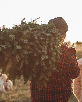 christmas tree being carried at sunset