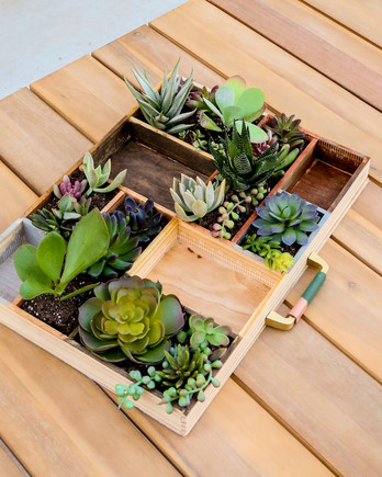 succulent planter in a letterpress tray