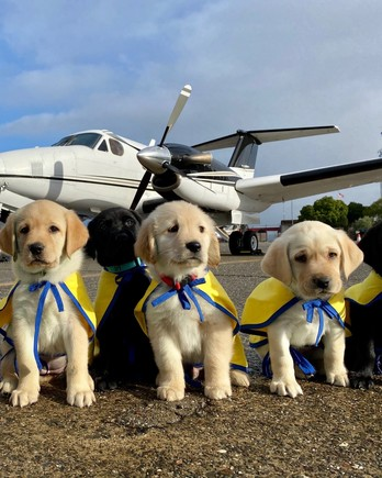 row of puppies in front of plane