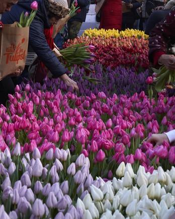 people gathering tulips