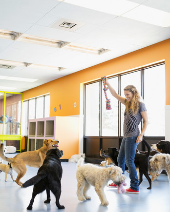 woman playing with dogs boarding center rope toy