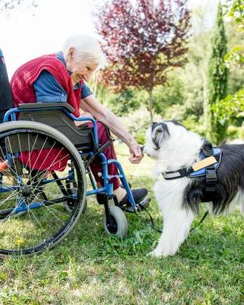 senior woman wheelchair-bound playing with a therapy dog outdoors