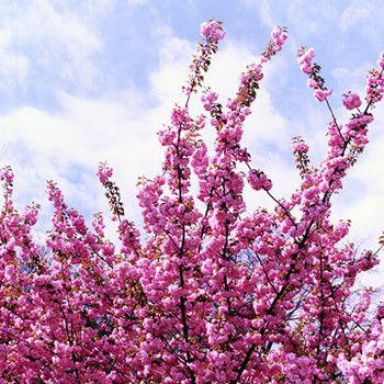 Self-Hypnosis for Allergies