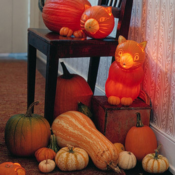 Pumpkin Creatures: Cats