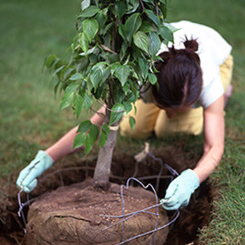 Better Root Growth Tip