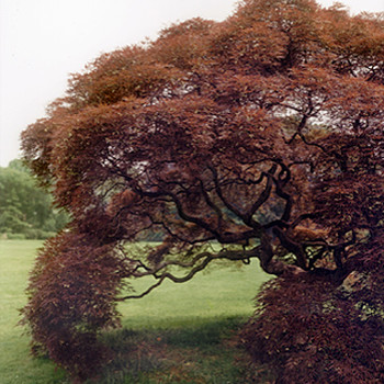 Living Legacy: Anne Holt's Gardens