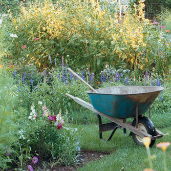 Allergy Tips for Gardeners