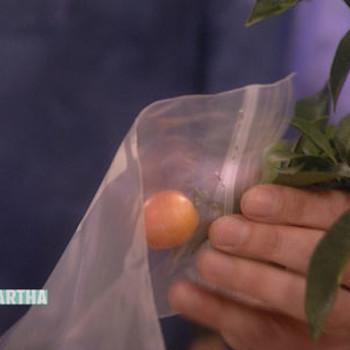 Garden Remedies, 1