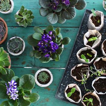 Start a Family Garden Video