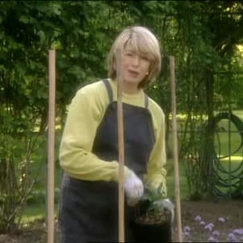 Planting Dahlias