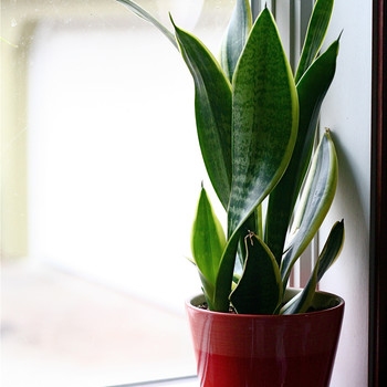 Low-Maintenance Houseplants That Will Live Even When You're Away