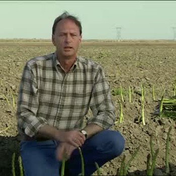 Farming Asparagus