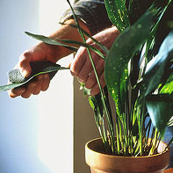 The Trick to Cleaning Houseplants Properly