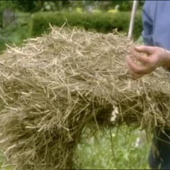 Using Hay as Mulch