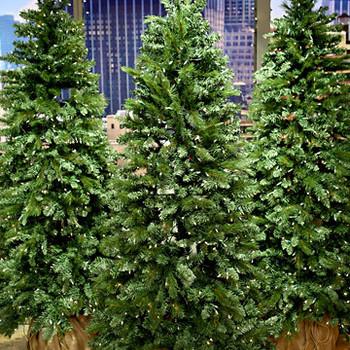 Christmas Tree 101 Tips