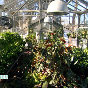 Martha's Greenhouses