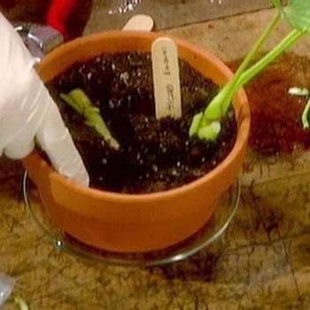 Propogating Plants