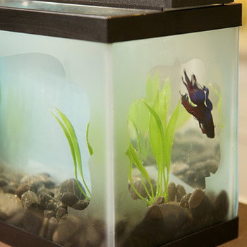 Etching a Fish Tank