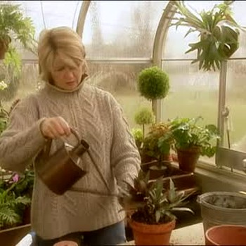 How to Re-pot Plants