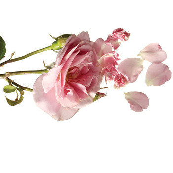 9 Fresh Ways to Use Rose Petals