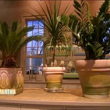 Potting Shade Plants