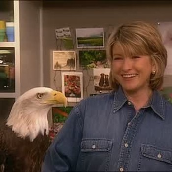 All About Bald Eagles