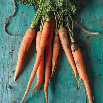 carrots-0411mbd106969.jpg