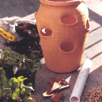 Planting a Strawberry Pot