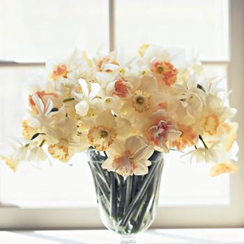Daffodil Flower Care