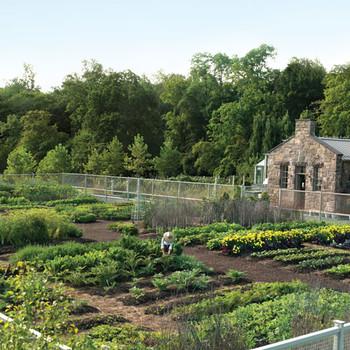 Vegetable Garden Prep