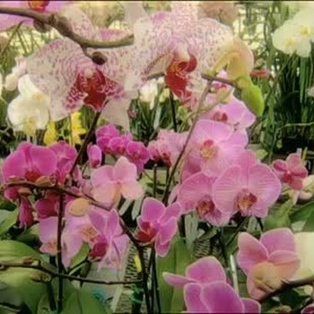Orchids For Your Home