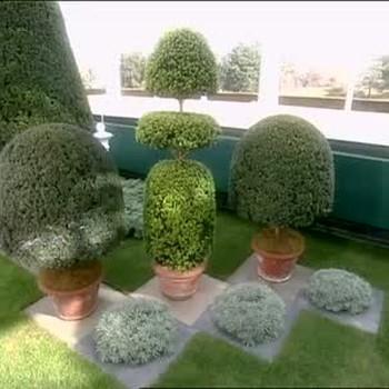Topiary Plants, Part 1
