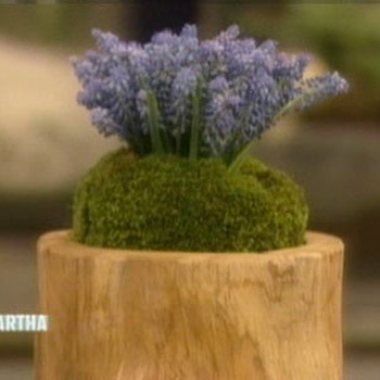 Muscari Arrangement