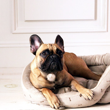 How-To Clean a Pet Bed