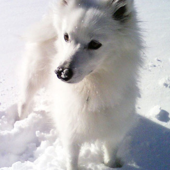Protecting Pets from Antifreeze