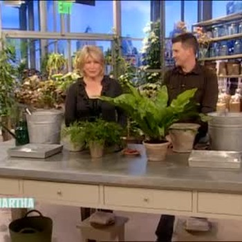 Step by Step Repotting