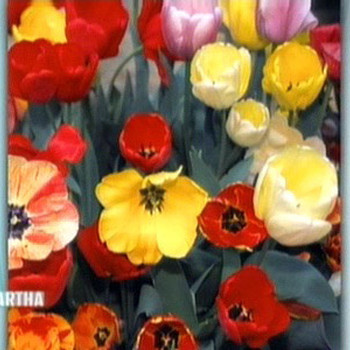 Ordering Spring Bulbs with Becky Heath